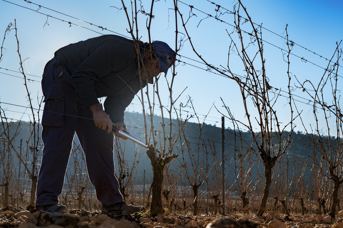 Trabajador podando viñas